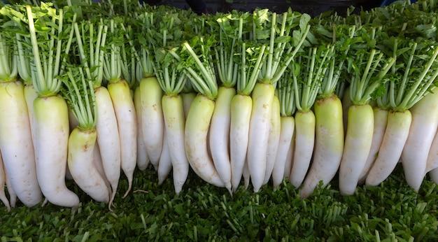 Agriculteur récolte et nettoie le daikon (radis japonais) sur les terres agricoles en vue de son exportation vers le marché.