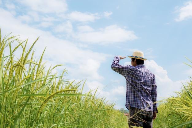 Agriculteur en rizière.