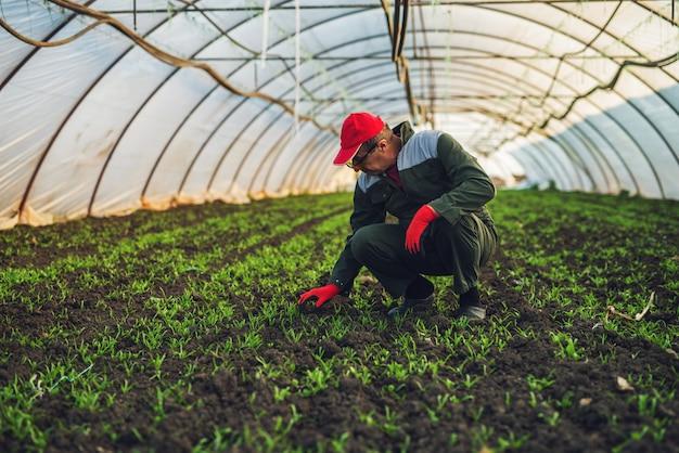 Agriculteur senior moderne en uniforme professionnel avec des gants et une casquette à genoux dans la serre et vérifiant les jeunes plantes vertes.