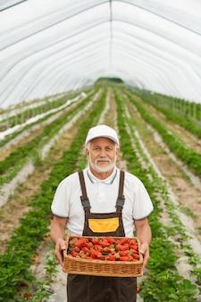 Agriculteur tenant un panier en osier avec une savoureuse fraise rouge