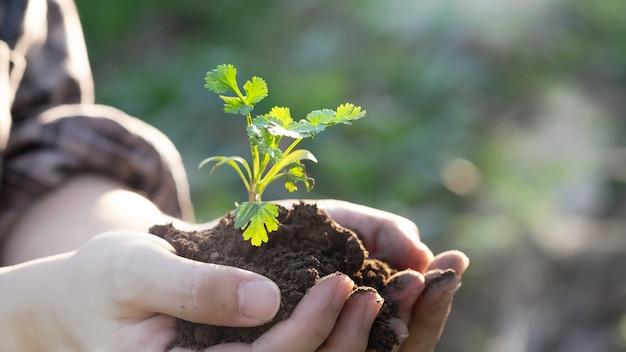 Agriculteur tenant pile et bébé plante dans un champ agricole cultivé