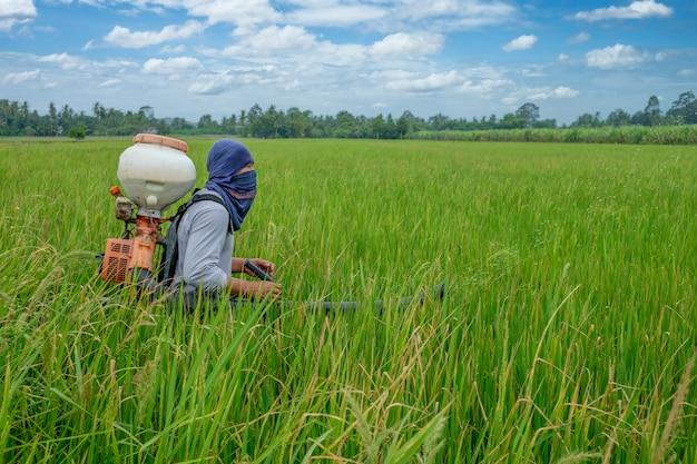 Agriculteur thaïlandais asiatique aux herbicides ou engrais chimiques équipement dans les champs