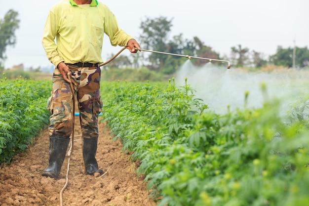 Agriculteur thaïlandais local ou jardinier pulvérisant un produit chimique