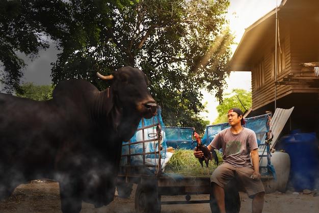 Agriculteur thaïlandais tenant et nettoyant un poulet, mode de vie sain des personnes dans le concept asiatique