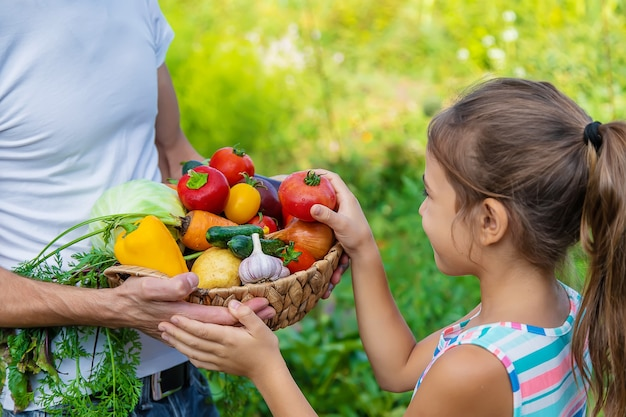 Un agriculteur tient des légumes dans ses mains et un enfant. mise au point sélective. nourriture.