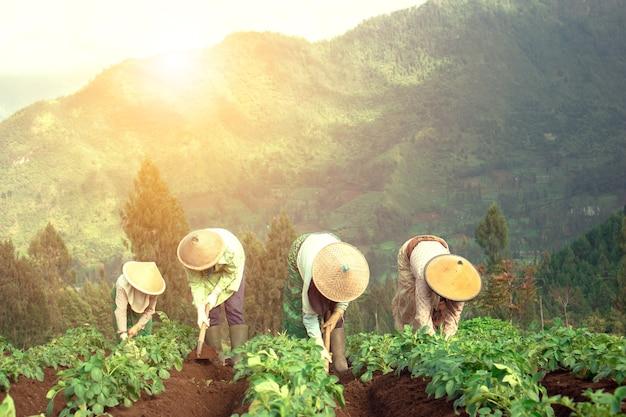 Agriculteur traditionnel travaillant au champ vert