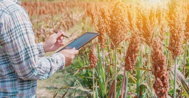 Agriculteur utilisant une tablette pour vérifier la qualité des cultures agricoles sur le terrain. corne d'abondance de récolte d'automne en saison d'automne.