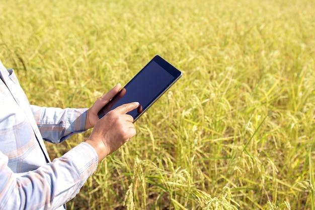 Agriculteur utilisant une technologie de tablette inspectant la riziculture dans une ferme
