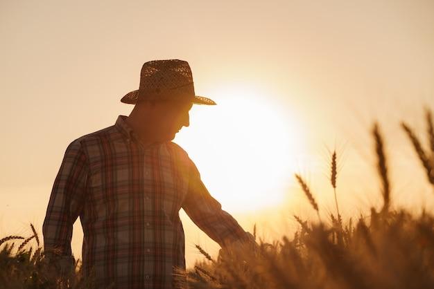 L'agriculteur vérifie la récolte de blé le concept d'une riche récolte dans un domaine agricole
