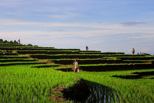 Les agriculteurs avec activité le matin