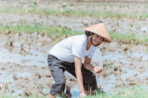 Les agriculteurs asiatiques se penchent en portant des chapeaux lorsqu'ils plantent du riz dans les champs
