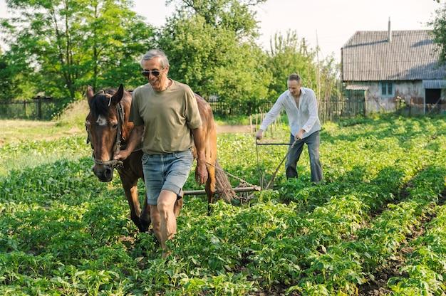 Les agriculteurs labourent une terre en butinant des rangées de pommes de terre