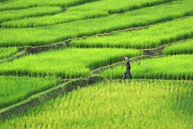 Agriculteurs marchant sur le champ de riz de la crête. beau paysage à chiang mai, thaïlande