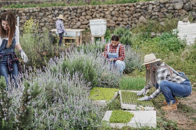 Agriculteurs multiraciaux travaillant à l'extérieur - personnes multigénérationnelles travaillant pour une ferme agricole et profitant de la période de récolte