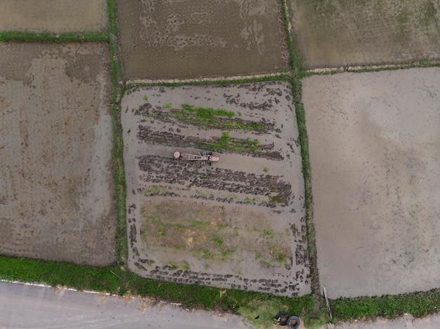 Les agriculteurs plantent un champ de riz, vue de dessus, photo aérienne