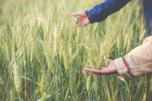 Les agriculteurs récoltent l'orge avec bonheur.