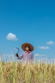 Les agriculteurs récoltent des récoltes dans les rizières. jour de ciel lumineux
