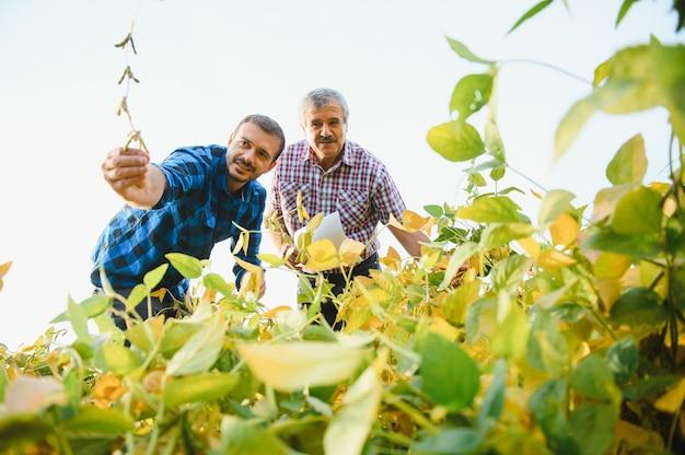 Agriculteurs travaillant sur la plantation, tenant un petit semis de soja.