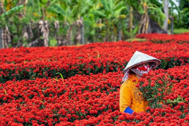 Agriculteurs vietnamiens travaillant avec le jardin de fleurs rouges à sadec, province de dong thap