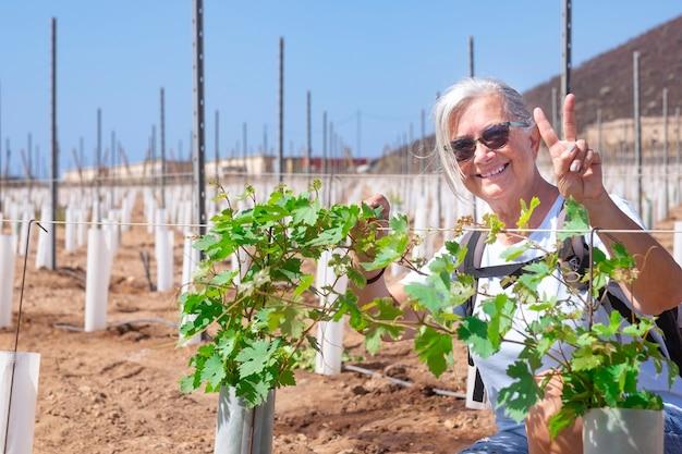 Une agricultrice âgée contrôle les pousses du nouveau vignoble souriant fièrement et gesticulant d'accord avec les mains - personnes âgées à la retraite actives aux cheveux blancs à la campagne
