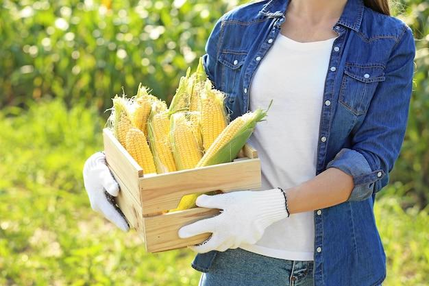 Agricultrice avec des épis de maïs mûrs dans le champ