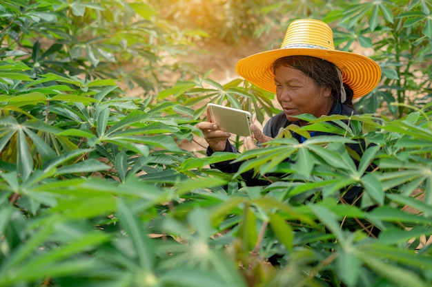 Agricultrice intelligente tenant la tablette debout dans le champ de manioc pour vérifier son champ de manioc. concept de réussite pour les agriculteurs et les agriculteurs intelligents