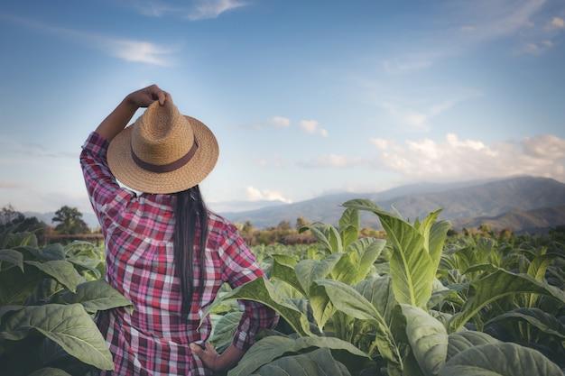 Une agricultrice regarde le tabac dans les champs.
