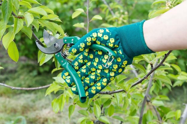Une agricultrice s'occupe du jardin. taille de printemps des arbres fruitiers. femme en gants avec un sécateur