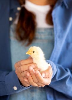Agricultrice tenant un bébé poulet