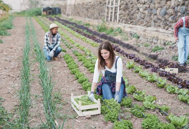 Les agricultrices multiraciales âgées profitent de la période des récoltes et travaillent ensemble - nourriture fraîche et saine