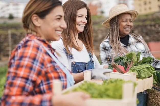 Les agricultrices multiraciales matures apprécient la période de récolte et travaillent ensemble