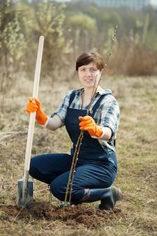 Les agricultrices plantent des pousses