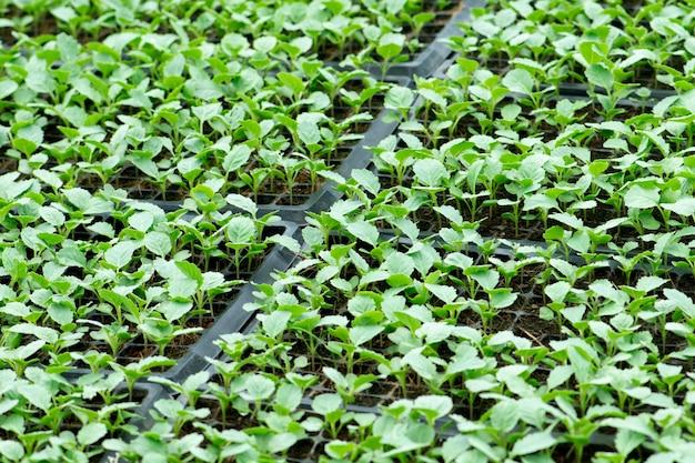 L'agriculture biologique, les plants poussant en serre