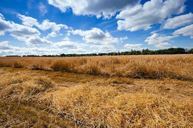 Agriculture - un champ agricole sur lequel la récolte est effectuée