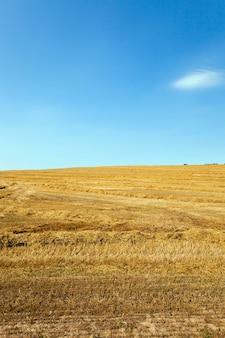 Agriculture - un champ agricole sur lequel récolter une récolte de céréales (blé)