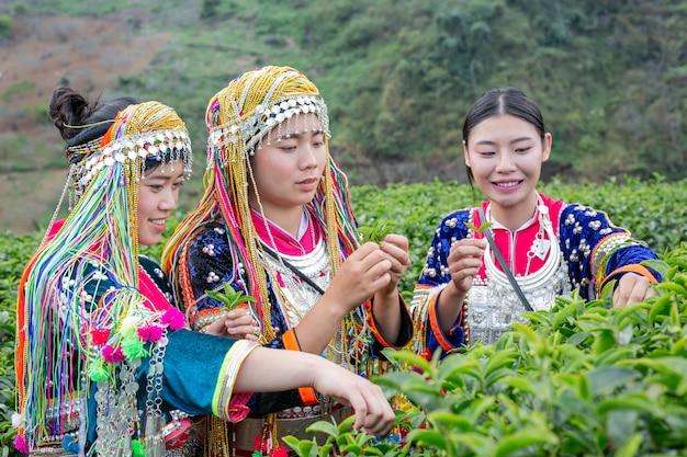 Agriculture des femmes des tribus des collines
