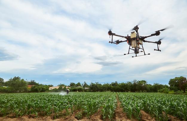 Agriculture intelligente agriculture drone voler pour pulvériser sur les champs de maïs, les agriculteurs pulvérisent des insecticides avec des drones agricoles