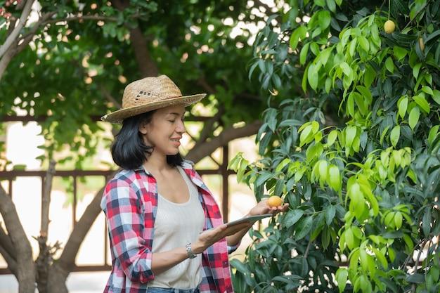 Agriculture intelligente utilisant des technologies modernes dans l'agriculture. agricultrice avec ordinateur tablette numérique, téléphone dans la ferme marian prune à l'aide d'applications et d'internet, marian prune, marian mangue. (mayongchid en thaï)