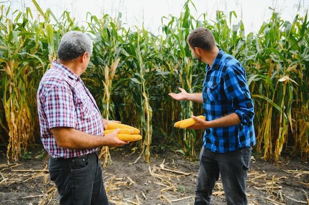 Agrobusines familiales, agriculteurs debout dans un champ de maïs, regardant et pointant du doigt, ils examinent le corp au coucher du soleil
