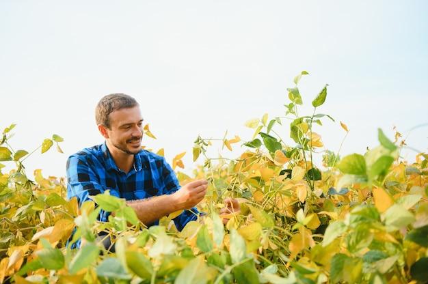 Un agronome agriculteur inspecte le soja qui pousse dans un champ. agriculture