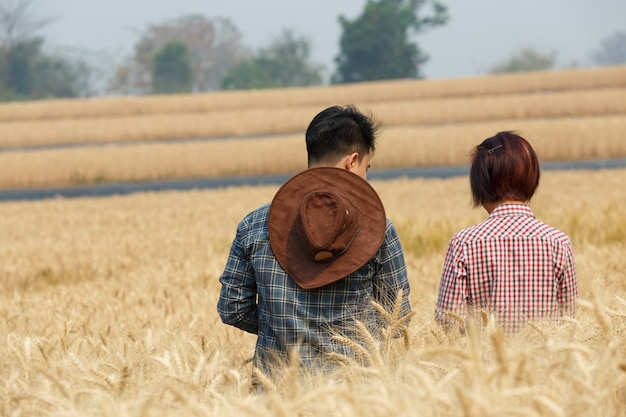 Agronome et agriculteur vérifiant les données dans un champ de blé avec une tablette et une culture d'examen.