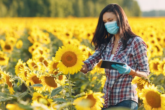 Agronome agricultrice en gants et masque facial au champ de tournesol avec tablette vérifiant la récolte.