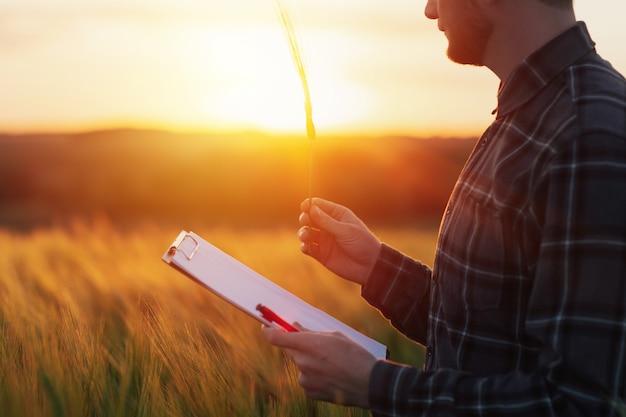 L'agronome examine la qualité de la récolte