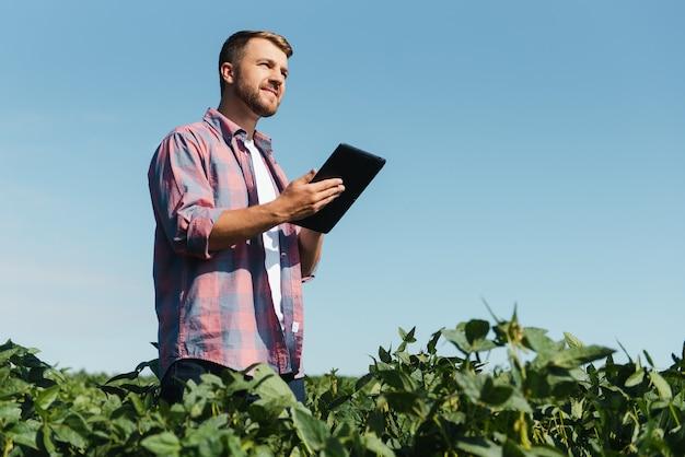 Agronome inspectant les cultures de soja poussant dans le champ agricole. concept de production agricole. jeune agronome examine la récolte de soja sur le terrain en été. agriculteur sur le champ de soja