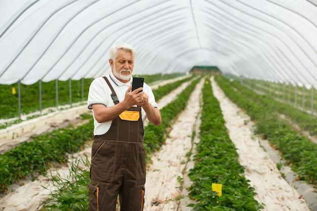 Agronome senior compétent en uniforme utilisant un smartphone moderne tout en se tenant sur une plantation de fraises. technologie moderne pour la culture des plantes.