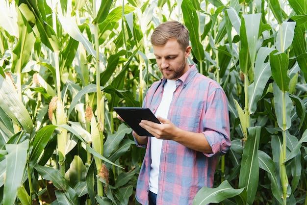 L'agronome tient un ordinateur tablette tactile dans le champ de maïs et examine les cultures avant la récolte. notion d'agro-industrie. ferme brésilienne.