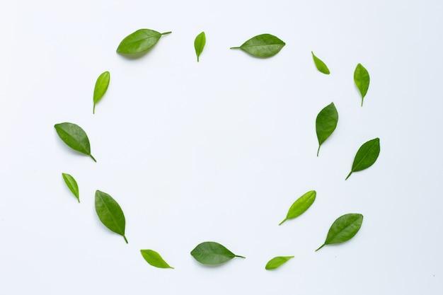 Agrumes feuilles cercle sur fond blanc