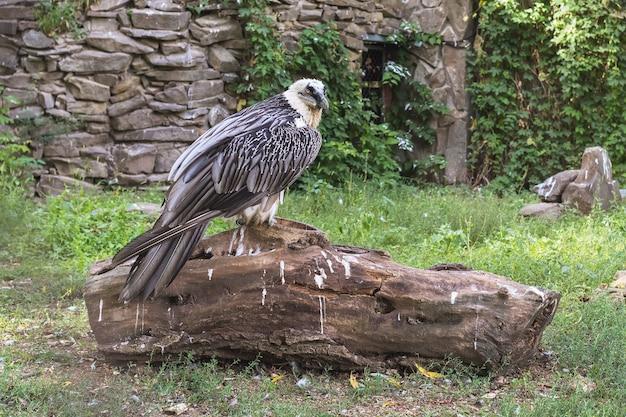 Aigle assis sur une grosse bûche dans le parc
