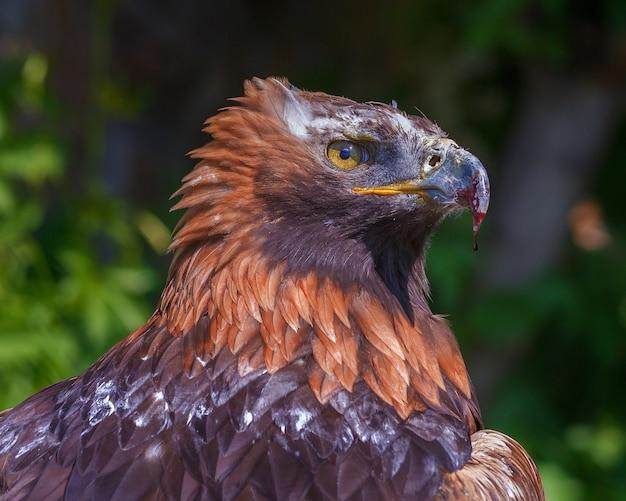 Un aigle au zoo