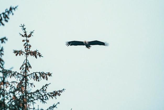 Aigle planant dans les airs